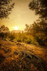 Let The Sun Shine (TheExplorographer.com) Tags: america california foresta photography yosemite adwheeler explore forest landscape morning sony sonyalpha sonyalphauniverse sonyimages sunrise travel wallart wilderness