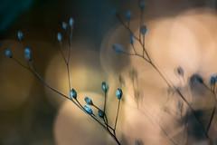 Abends im Spätsommer (anita.niza) Tags: abend evening blurred