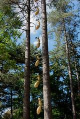 """Ailleurs"" (picsl.art) Tags: installation artwork parcfloral paris art fourmis ant robledo moreno arbre ciel"
