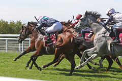 Sussex Stakes (Arkle1) Tags: