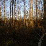 Forest patch at Wagner thumbnail
