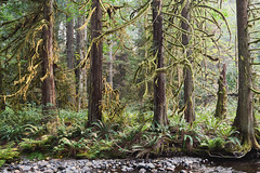 Lower Nile Valley Aug 20 2018 (PRS Images) Tags: weeklytheme flickrlounge forest trees nile creek bc