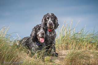 Stan and Oli in the Dunes (Explored 03-09-2018)
