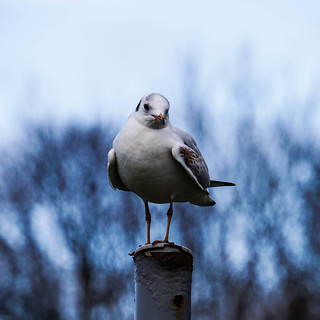 Bird On a Pole in strathclyde country park