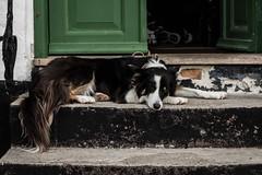 Ebeltoft (michael_hamburg69) Tags: ebeltoft dänemark danmark denmark djursland dog hund nap napping dösen steps stufen eingang
