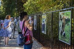 """Expo photos """"Les Souchard"""" (Pierre ESTEFFE Photo d'Art) Tags: expo exposition photo exterieur vache ruminent journaliste chambonlaforêt loiret45 france"""