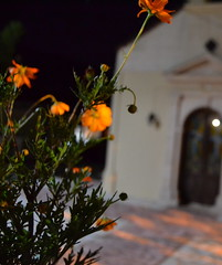 Greece (mademoisellelapiquante) Tags: greece europe crete drapanos night flowers flower flora church greekorthodox orthodox