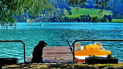 Dog days (gerard eder) Tags: world travel reise viajes europa europe austria österreich tirol tyrol walchsee animals animales tiere dog hund perro wasser water landscape landschaft lake lago paisajes panorama natur nature naturaleza see beach strand playa outdoor