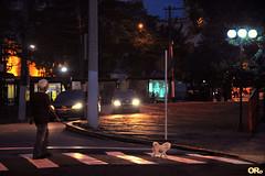 Walking the dog (Otacílio Rodrigues) Tags: cachorro dog homem men carros cars luzes lights postes lampposts faixadepedestre crosswalk árvores trees calçadão promenade rua street urban resende brasil oro
