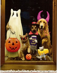 Postcrossing US-5560499 (booboo_babies) Tags: cat dog dogs mouse halloween autumn animals pets jackolantern costumes cute postcrossing funny