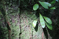 reference-169 (TLCStudentReferences) Tags: helenastackhouse leaves newzealand tree texture bokeh web lichen moss nz flowers