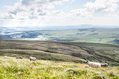Sheep On The Dales (jamesromanl17) Tags: landscape landscapes buckden yorkshire dales national park england britain uk countryside nature sheep field fields sky skies clouds cloud cloudscape cloudy sun sunlight light summer valley mountain hill animal animals