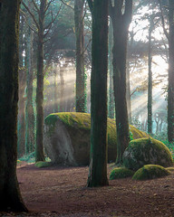 Old Stone (Ricardo Toureiro) Tags: sintra landscape stone ancient moss light sunrise beams trees rocks godrays sunshafts sunrays magical morning forest woods portugal peninha mist