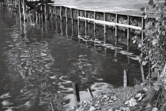 Playful reflection (Zsofia Nagy) Tags: 52weeksin2018 week34theme week342018 happy happiness reflection tükröződés boldogság lake tó water víz blackandwhite blackwhite bw feketefehér playful