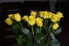 DSC_1557 (PeaTJay) Tags: nikond750 sigma reading lowerearley berkshire macro micro closeups gardens indoors nature flora fauna plants flowers bouquet rose roses rosebuds