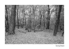 Wald 2018_04 (henningpietsch) Tags: wald forrest baum tree trees bäume blackandwhite schwarzweis sw bw canon canond5markiii sigma20mmf14dghsm sigma sigmallens weitwinkel outdoor imwald wideangle