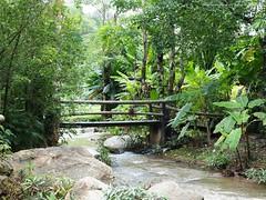 Trail 2. (natureflower) Tags: trees green bridge waterfall forest rocks bamboo tranquil