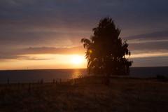 IMG_6781 (ro3duda) Tags: denmark nordsee ostsee northsea eastsea summer beach sand seaside dänemark sunrise tentwithaview