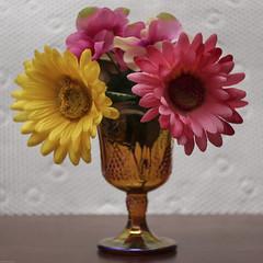 Goblet with Flowers (N.the.Kudzu) Tags: tabletop stilllife depressionglass goblet flowers canondslr lensbabyburnside35 lightroom