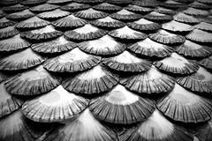 Esencia gallega (Osruha) Tags: cambados pontevedra galicia españa espanya spain esenci essència essence marisco marisc shellfish zamburiña petxina composición composició composition monocromo monocrom monochrome blancoynegro blancinegre blackandwhite bn bw