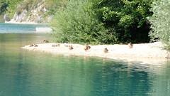 DSCF8391 (rmassart) Tags: m08 y2018 croatia plitvicka jezera plitvickajezera plitvichka lakes