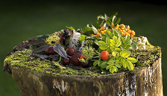 Autumn Is On The Way (Gary Stamp cPAGB) Tags: autumn canon stilllife arty