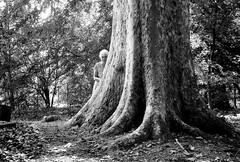 Parco del Neto (Mattia Camellini) Tags: sestofiorentino calenzano pentax105zoomsuper analog pellicola biancoenero blackwithe monochrome ilfordfp4 ilfosol3 canoscan9000fmarkii mattiacamellini people natura tree albero platano