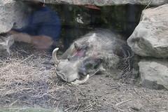 IMG_6723 (bronsonwo) Tags: indianapolis zoo