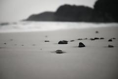 白鼠     しろねずみ (小川 Ogawasan) Tags: japan japon white beach sand