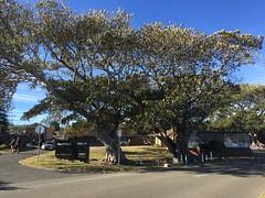 IMG_5033 (dudegeoff) Tags: northhead sydneyharbournationalpark sydney australia bikerides 2018 august winter 20180804asydnorthheadbikeride