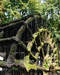 La roue à aube à l'Isle sur la Sorgue (Missfujii) Tags: roueàaube lislesurlasorgue