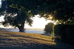 High contrast (P1n24) Tags: vintagelens tamronadaptall 90mmmacro sun trees lake warm summer sunset sunstars sonya7ii fullframe