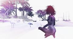 summertime (PralineB) Tags: secondlife avatarlife flamingos fadedmatted beach attitude virtualcharacter