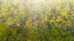 The sparks that light the fire of fall (bill.d) Tags: dji djiphantom4advanced kalamazoocounty michigan portage schoolcraft sugarloaflake us unitedstates aerialphotography autumn drone fall flying lake outdoor summer sunny water