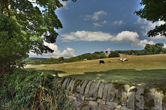 Walled Field (Bri_J) Tags: stanageedge peakdistrict nationalpark hathersage derbyshire uk hills countryside nikon d7200 hdr clouds sky field drystonewall trees