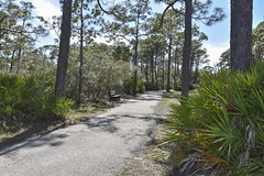 St. George Island Trail (ckorfanty) Tags: nature tree trees st george island plantation trail palm landscape green sky