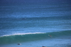 IMG_3888 (gervo1865_2 - LJ Gervasoni) Tags: surfing with whales lady bay warrnambool victoria 2017 ocean sea water waves coast coastal marine wildlife sealife blue photographerljgervasoni
