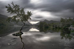 """The Tree"" (Cliff-Spittle) Tags: llanberis wales snowdonia longexposure leefilters bigstopper thetreellanberis nikond850 nikon1635mm"