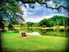 Taman Tasik Taiping, 34000 Taiping, Perak https://goo.gl/maps/wRVVMUNuACP2 #reizen #vakantie #voyage #viaggio #viaje #resa #Semester #Fiesta #Vacanza #Vacances #Reise #Urlaub #sjö #lago #Lac #see #meer #Asia #Malaysia #Taiping #太平湖公园 #travel #holiday #tri (soonlung81) Tags: trip วันหยุด vacanza sjö путешествие malaysia 휴일 vakantie resa lake taiping 旅行 reise semester see asia 여행 voyage reizen 호수 度假 urlaub lac 太平湖公园 ホリデー озеро بحيرة meer การเดินทาง праздник holiday 湖 lago ทะเลสาป 亞洲 vacances fiesta viaggio viaje travel