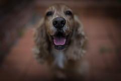 _DSC1117 (autrant) Tags: dog pet