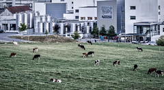 Farming and Industry (*Capture the Moment*) Tags: 2018 architektur cows farming gebäude industrie industry kantonbern kühe landwitschaft schweiz sommer sonya7miii sonya7mark3 sonya7m3 sonya7iii sonyfe70200mmf28gmoss sonyilce7m3 switzerland