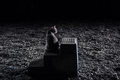 charles the grey (Jen MacNeill) Tags: cat cats feline animals pet pets grey gray mountingblock monotone
