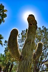 Arizona Cacti (trident2963) Tags: university arizona dragon cactus cacti region artistic black white bw fine art closeshot