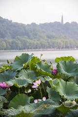 dsc_1265 (gaojie'sPhoto) Tags: hang zhou hangzhou westlake west lake