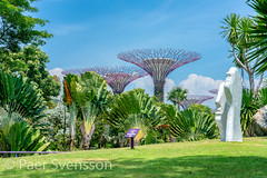 Sculpture and Supertrees (per.svensson@mac.com) Tags: grass supertrees natural the flower leaf vacation noperson lawn sightseeing flora gardens outdoors 11 sunny nature bay outdoor holiday palm garden sun summer tree tourist beautiful travel landscape tourism singapore sky park by lush tropical sculpture sg