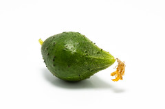 "Macro Mondays ""defining beauty"" (Antti Tassberg) Tags: macromondays texture kasvi 100mm macro ruoka vihannes kurkku cucumber food lens plant prime vegetable highkey green"