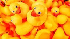 Rubber Duckies (Thad Zajdowicz) Tags: zajdowicz pasadena california usa rubberduckies toys color yellow colour cellphone smartphone samsung galaxy s9 snapseed