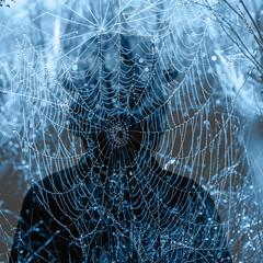 Mr. Web (Walter Johannesen) Tags: spindelvæv spider web morgen morning vanddråber water drops vand dråber abstrakt abstrct portræt portrait blue blå