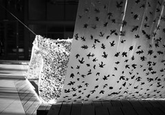 Curtain of leaves (Tpstearns) Tags: monochrome blackandwhite bw leica m240