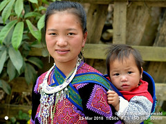 2018-03d Northeast Vietnam (87) (Matt Hahnewald) Tags: matthahnewaldphotography facingtheworld people head face eyes expression lookingcamera story babysling hair traditional pink black attire embroidery clothing consent parentalconsent concept humanity living travel culture tradition lifestyle love upbringing childhood anthropology ethnic tribal minority hilltribe rural cultural village motherhood motherandchild motherandbaby motherandson bacha laocai northern vietnam vietnamese hmong asian asia southeastasian twopeople female baby boy young woman photo nikond3100 primelens nikkorafs50mmf18g 50mm 4x3 horizontal street portrait halflength closeup seveneighthsview outdoor color posing authentic carryingbaby carryingonback clarity
